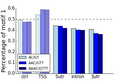 AC motifs strand bias