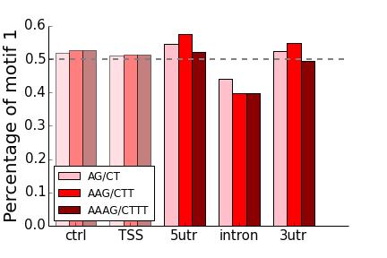 AG motifs strand bias